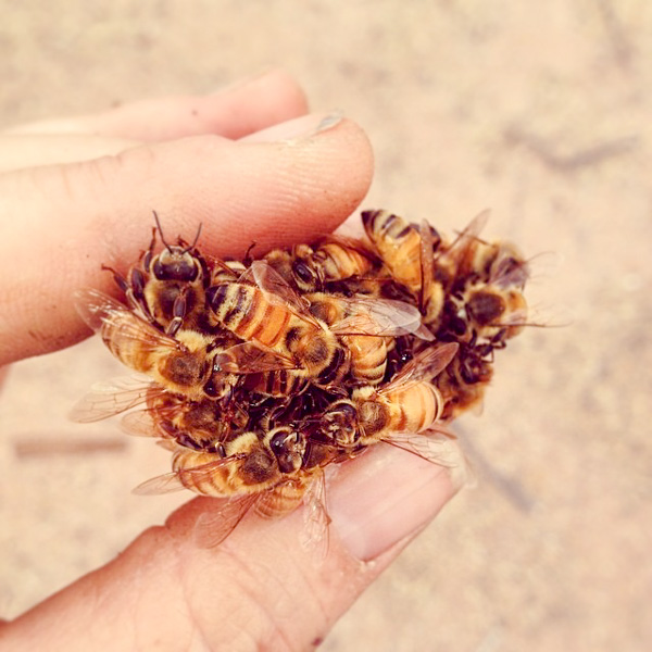 The Culture of Bees - Southwest Folklife Alliance