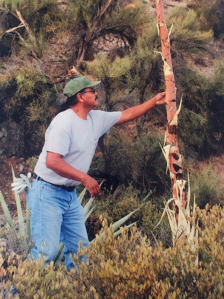 Belvado harvesting